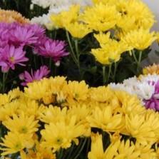 Prefeitura credencia floriculturas para venda nas proximidades dos cemitérios no Dia de Finados