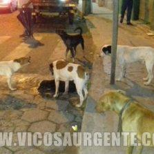 Polícia civil vai investigar o envenenamento de cães em Viçosa.