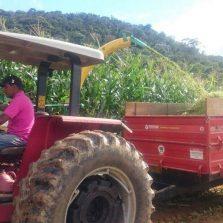 Produtor acompanhado pela Secretaria de Agropecuária bate recorde de produção de milho