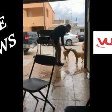 Vídeo que mostra homem esfaqueando cachorro não foi no Brasil