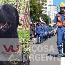Bombeiros: Cão que ajudou nas buscas em Brumadinho morre em serviço em Santa Catarina