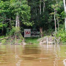Capes deve liberar R$ 7 milhões para pesquisas na Amazônia Legal