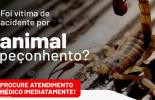 Secretaria de Municipal de Saúde orienta sobre acidentes com animais peçonhentos