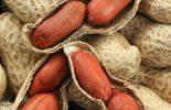Safra de amendoim em Minas crescerá quase 50% neste ano