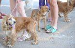 Certificação digital autoriza viagem de animais domésticos à Argentina