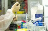 Anvisa autoriza mudanças em teste da vacina de Oxford