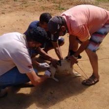 Nova etapa da vacinação antirrábica em Viçosa